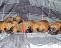 Puppies 16052015 A (800x464)