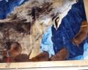 Puppies 22052015 B (800x502)