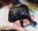 Purple Female 08052015 A (800x600)