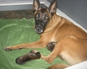 kwick-with-puppies-1-day-2-800x600